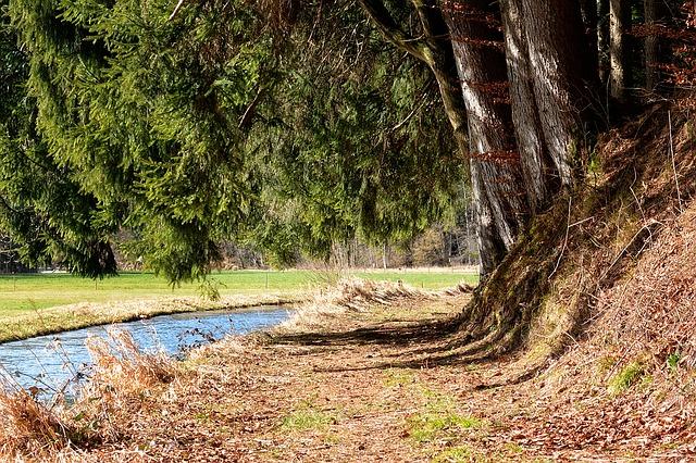 potok u lesa