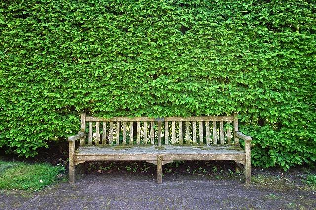 živý plot.jpg